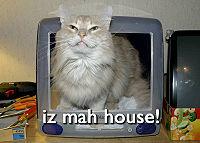 Calgary Cat